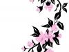 fiore-di-ciliegio