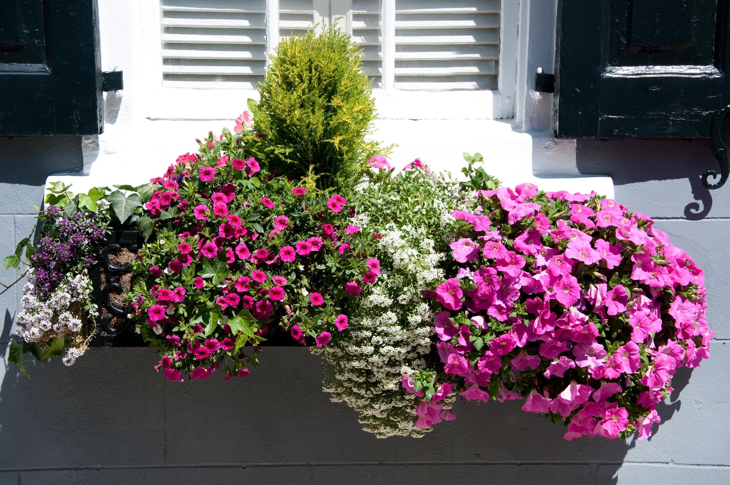 Come avere un balcone fiorito giardinaggio for Giardinaggio e fiori