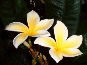 i fiori di bach per il benessere